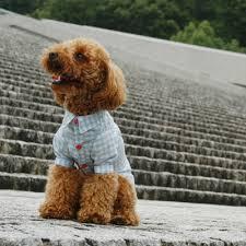 shirt pattern for dog shirt dog wear pattern shop milla milla