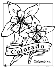 State Flower Of Colorado - state flower coloring pages colorado state flower coloring page