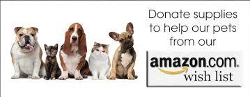black friday pet adoption lincoln cat u0026 kitten adoption