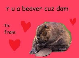 sloth valentines day card s card 4 pour sourire