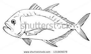 scientific drawing stock images royalty free images u0026 vectors