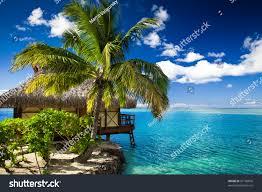 tropical bungalow palm tree next amazing stock photo 97106876