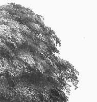 drawing trees drawing tips hints and techniques
