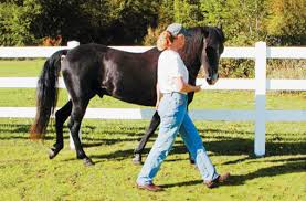 How To Tell If A Horse Is Blind Clicker Training With Horses And The Power Of
