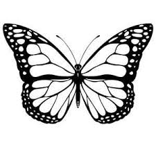 262 best butterflies images on pinterest draw drawing ideas and