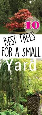 best small trees for landscaping front yard laphotos co