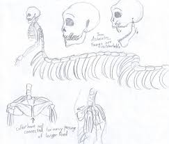 naga skeleton sketches by city of faith on deviantart