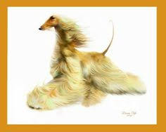 afghan hound jackets graphic original of gaiting afghan hound email link to four