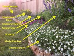 best 25 texas landscaping ideas on pinterest texas gardens