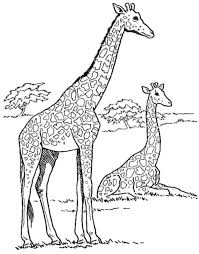baby giraffe coloring pages special offers