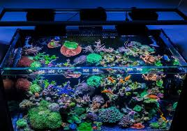 reef tank lighting schedule led coral growth hydra 26 or other reef2reef saltwater and reef