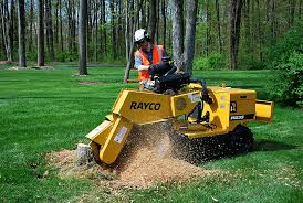 stump grinder rental near me stump grinder commercial rayco rg35 equipment rentals in