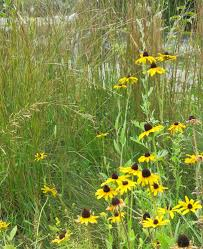 how to plant native grasses native grass and wildflower seeding q u0026 a with the experts