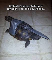 Funny Turtle Memes - a guard dog