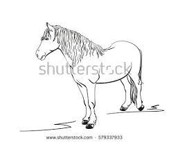sketch horse hand drawn vector illustration stock vector 579337933