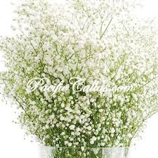 Baby S Breath Bouquets The 25 Best Babys Breath Flowers Ideas On Pinterest Babys