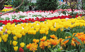 Spring Flower Garden Go Bring In Spring At These Vibrant Shows