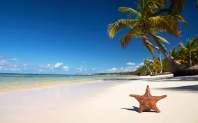 star fish beach wallpapers hd desktop wallpapers 4k hd