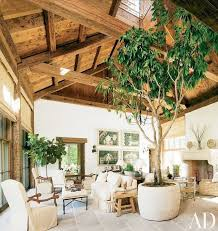 stunning indoor trees for the home ideas amazing design ideas