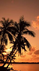 photo collection palm tree iphone wallpaper
