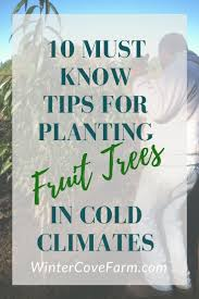 Climate Zones For Gardening - 55 best gardening in zone 4 images on pinterest dwarf trees