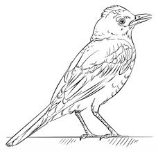 birds beautiful free printable bird coloring pages coloring page