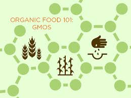 Are Gmos Genetically Modified Organisms