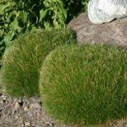 how to create a themed garden grasses gardens and plants