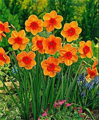 Spring Flower Pictures Best 25 December Birth Flowers Ideas On Pinterest December