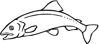 salmon fish coloring page salmon 11 coloring page free printable coloring pages