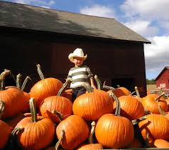 Best Pumpkin Patch Albany Ny by Herringtons Pumpkins Home Facebook