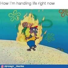 No One Cares Spongebob Meme - 1166 best spongebob images on pinterest ha ha funny stuff and