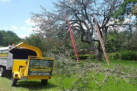 tree services tree trimming stump tree removal san antonio