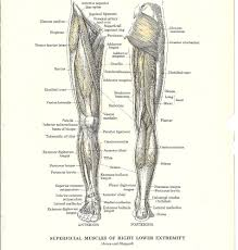 Anatomy Of Human Back Muscles Lower Back Muscles Diagram Human Anatomy Chart