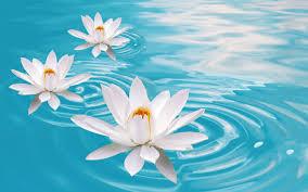 water flower wallpaper 1440x900 4960