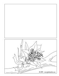 Coloriages coloriage bouquet de muguet  frhellokidscom