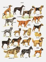 Types Of Dogs Rules Of The Jungle Identifying The Types Of Puppies