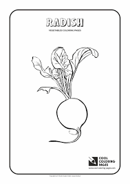 links radish download printable coloring pages vegetables radish