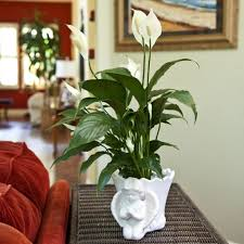 home design 1000 ideas about living room plants on pinterest 85 glamorous plants for living room home design