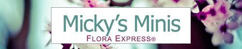 micky u0027s minis u2013 micky u0027s minis flora express