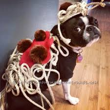Funny Halloween Costumes Dogs 158 Pet Halloween Costumes Images Homemade