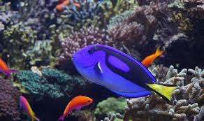 finding dory teaches memory loss asian scientist