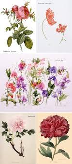 wedding flowers names bridal blooms garden flowers ruffled