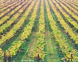 Napa Valley Home Decor Vineyard Print Etsy