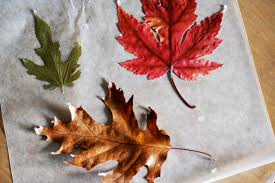 when is thanksgiving week picnics in the park thanksgiving week how to make waxed leaves