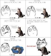 Best Memes Of 2011 - 43 best cat logic images on pinterest funny stuff funny things