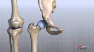 Anatomy Of The Knee Knee Anatomy Animated Tutorial Youtube