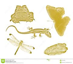 gold small backyard animals and insects stock image image 57887883