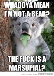 Patient Bear Meme - best of surprised koala bear meme 25 pics