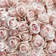 imagenes de rosas vintage rosas blancas textura y fondo floral flores de cerca boda y